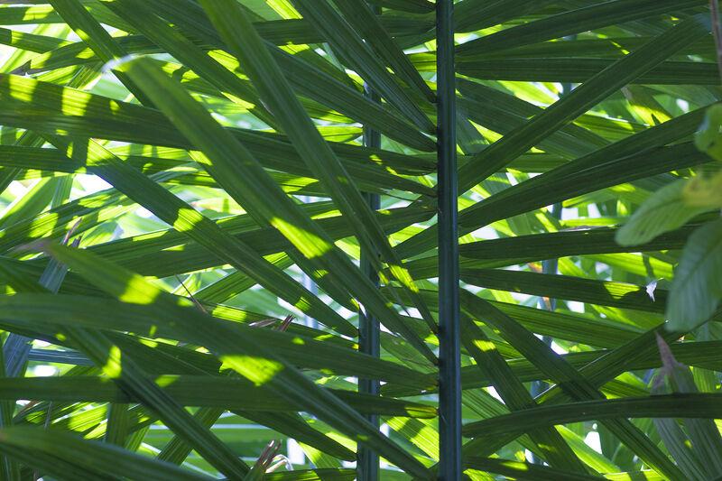 Como Conservatory fern detail