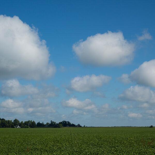 MDRF blog landscape